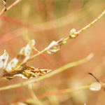 Top 5 Posts from the Last Year